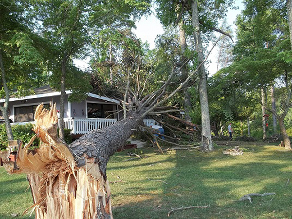 about us-storm-damage-tree-removal-Hughes-Tree-&-Stump-Grinding