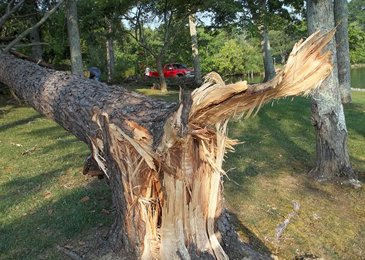 Tree damaged in storm